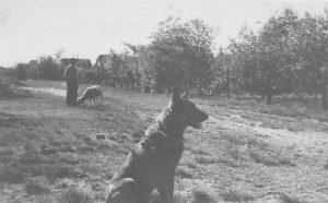 Rallenweg 1940